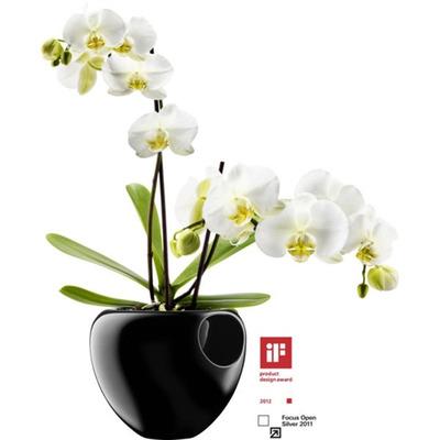 EvaSolo_Orchid_Pot_568241b.jpg