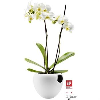 EvaSolo_Orchid_Pot_568240b.jpg