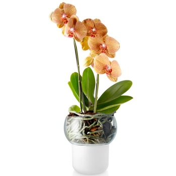 Eva_Solo_Selfwatering_orchidpot_13cm_568148_Bohero.jpg