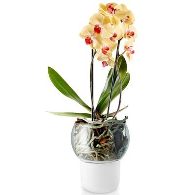 Eva_Solo_Selfwatering_orchidpot_15cm_568149.jpg